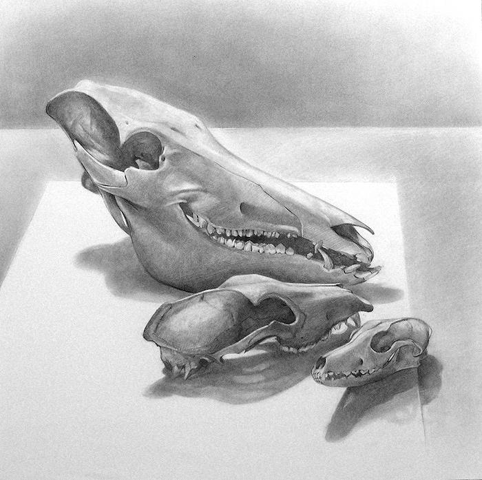 Scott Hutchison's graphite drawing - Boar Dog Fox